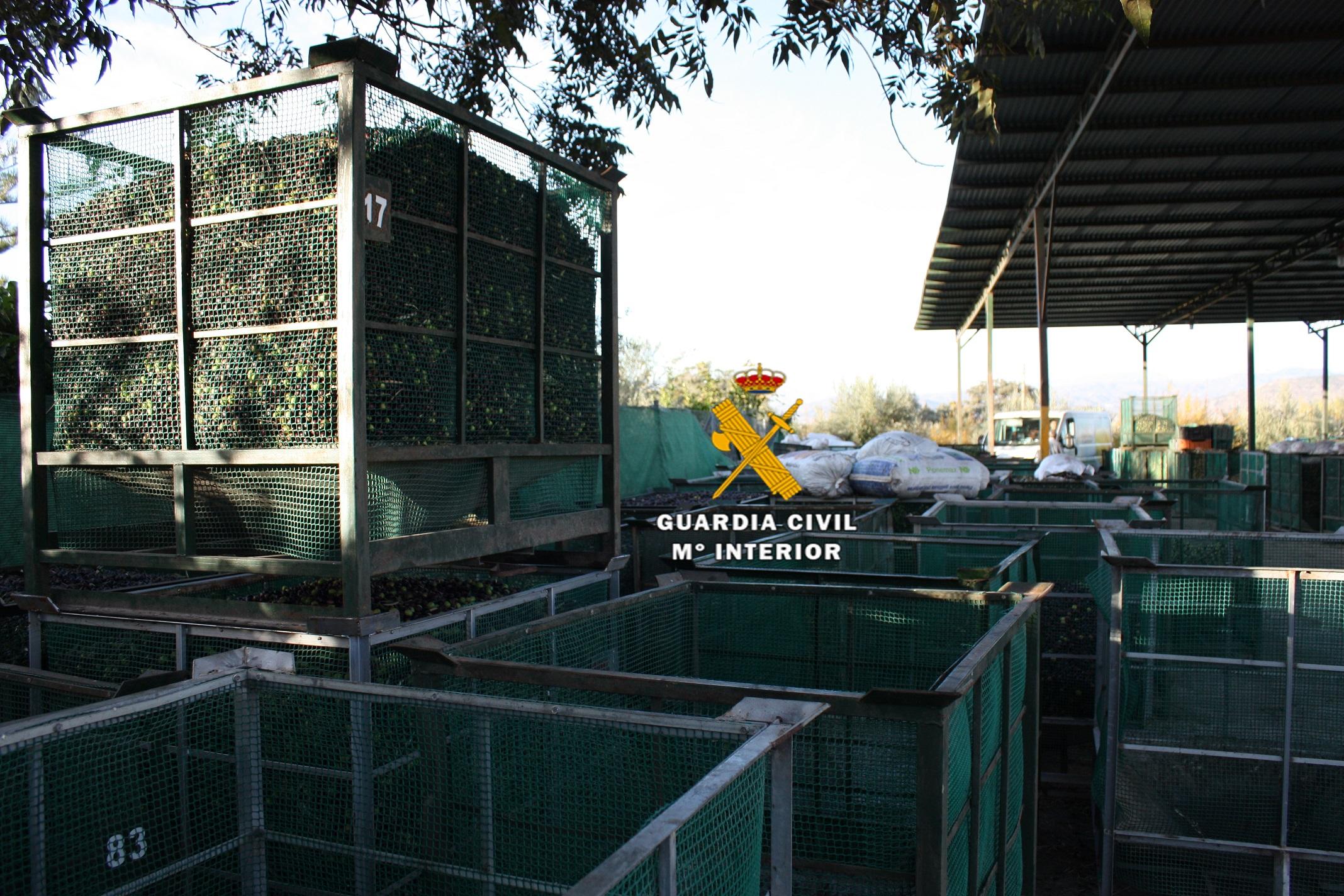 Detenidas 10 personas por el robo y receptación de aceitunas en el Guadalhorce