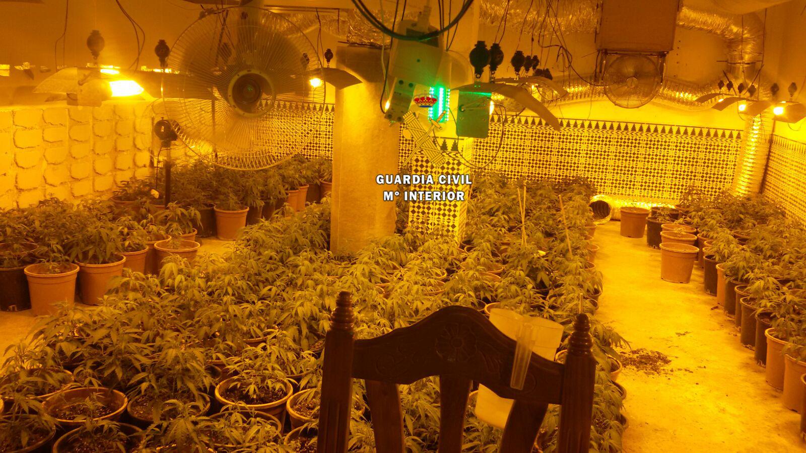 La Guardia Civil detiene a 7 personas por el cultivo de marihuana en el Valle del Guadalhorce