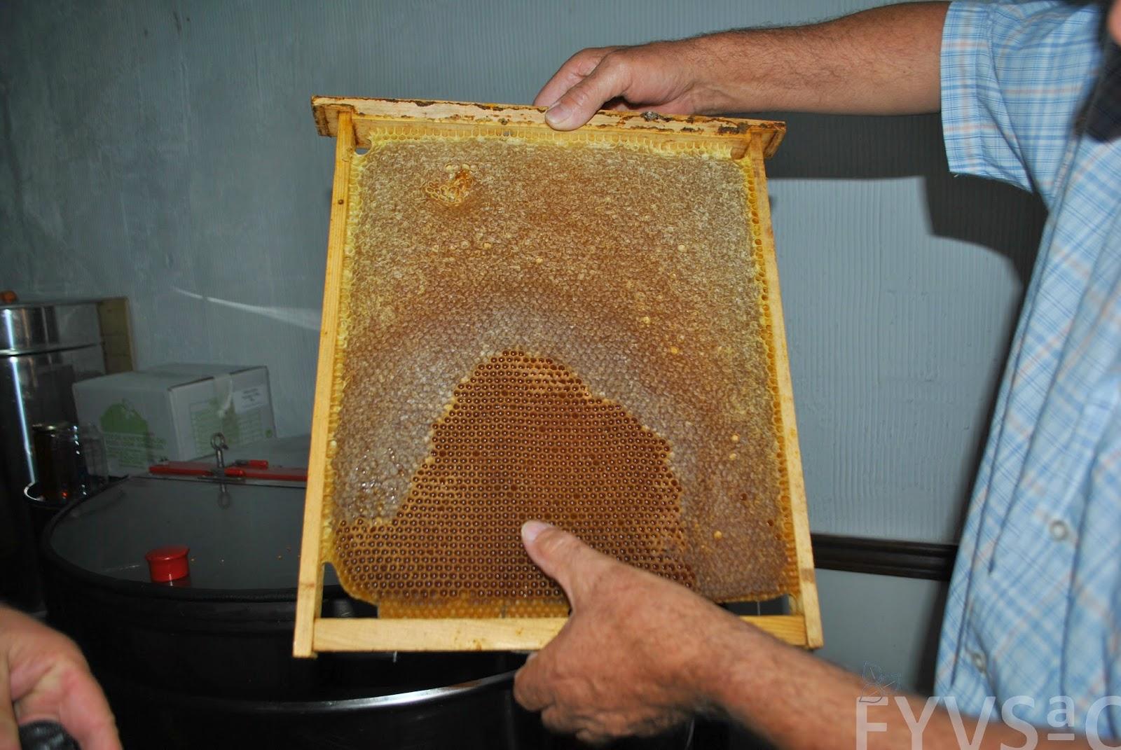 Familias dedicadas a la apicultura producen miel en la Sierra de Cártama