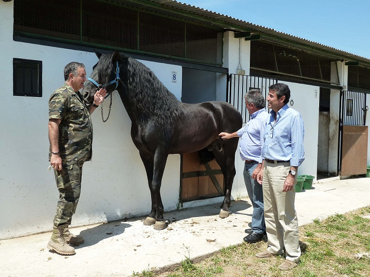 La parada de caballos sementales vuelve a contar con el respaldo de los ganaderos