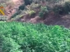 marihuana-guadalhorce